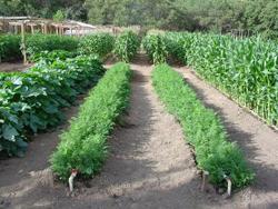 Что посадить в огороде и как правильно: лучшие советы и